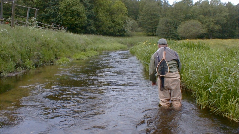 Seatrout dryfly wading