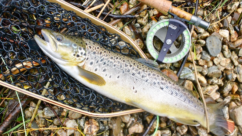 170206_lake_wakatipu_trout.jpg