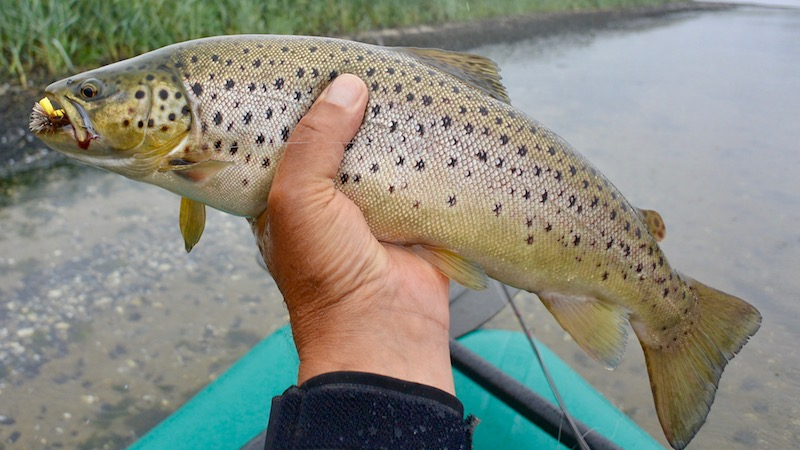 170807_mariager_trout_flies.jpg