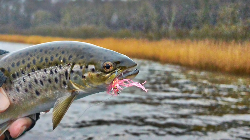 171225 eaglewalley trout