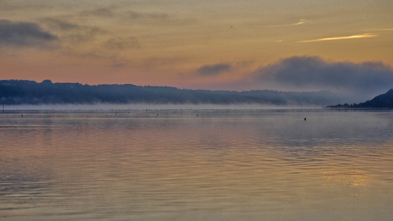 180902_ornedalen_birds_morning.jpg