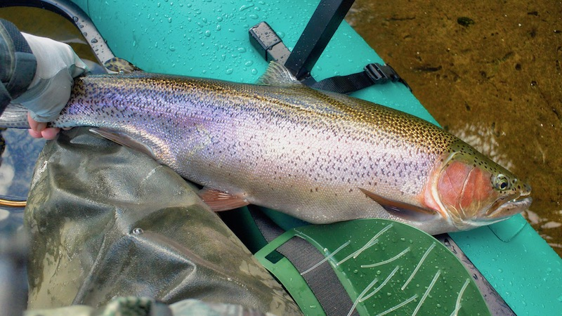 181205_lakeO__rainbow_trout.jpg