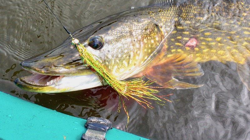 190514_northriver_pike_fly.jpg