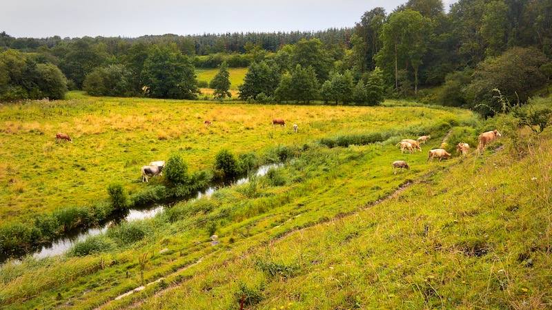 190808_villestrup__river_valley.jpg